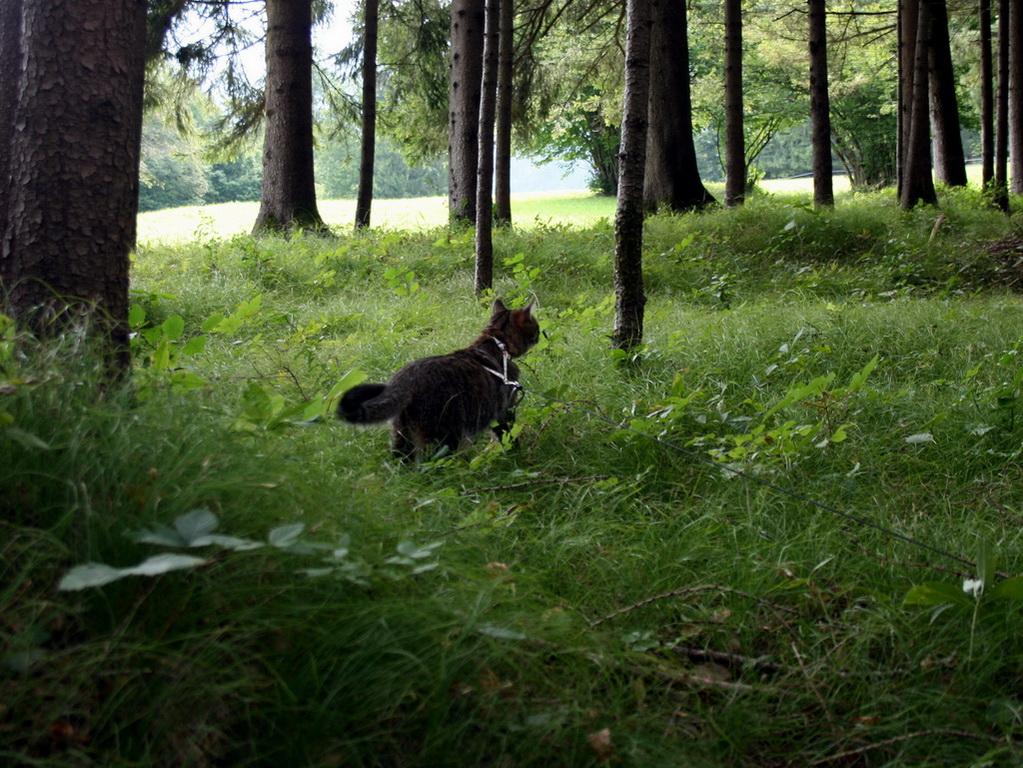 Belly dans les bois