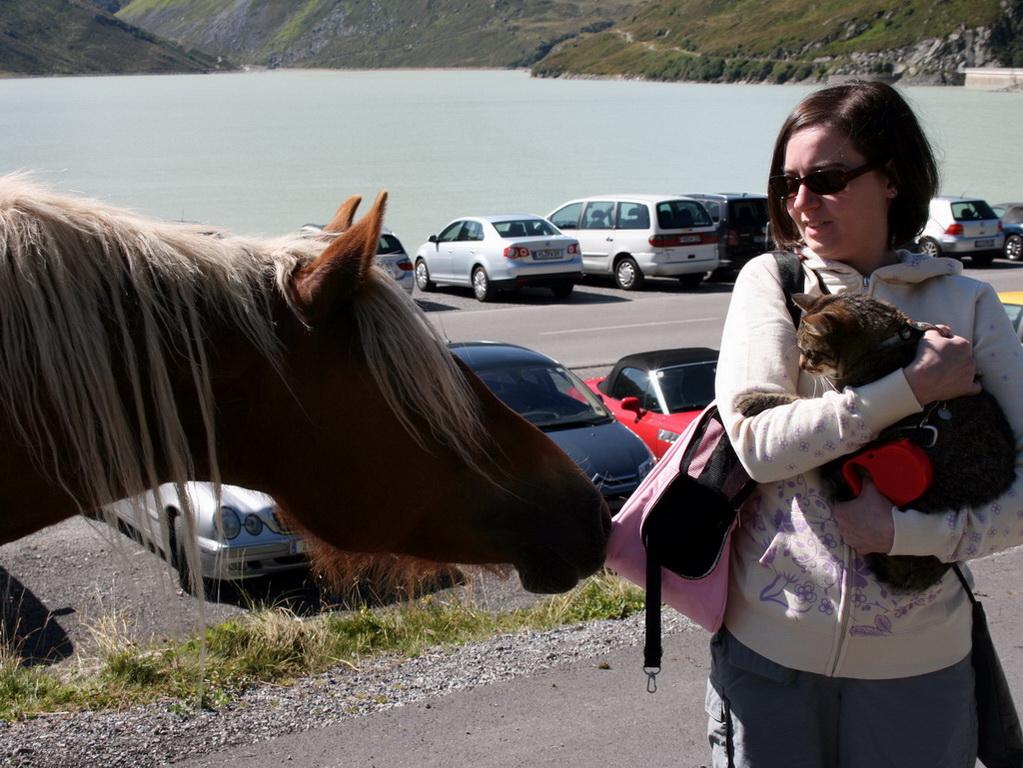 Belly découvre un cheval